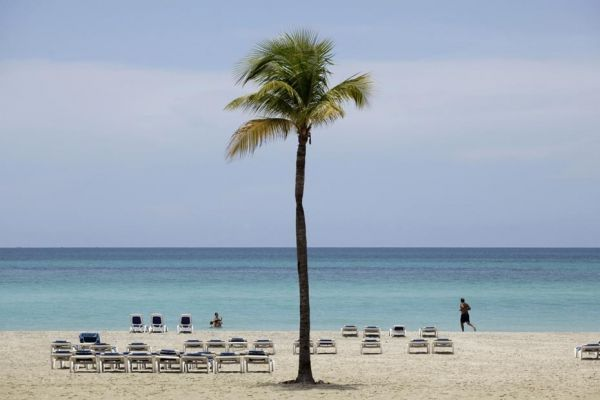 04.04.Palmier.plage.cocotier.Reuters.930.620