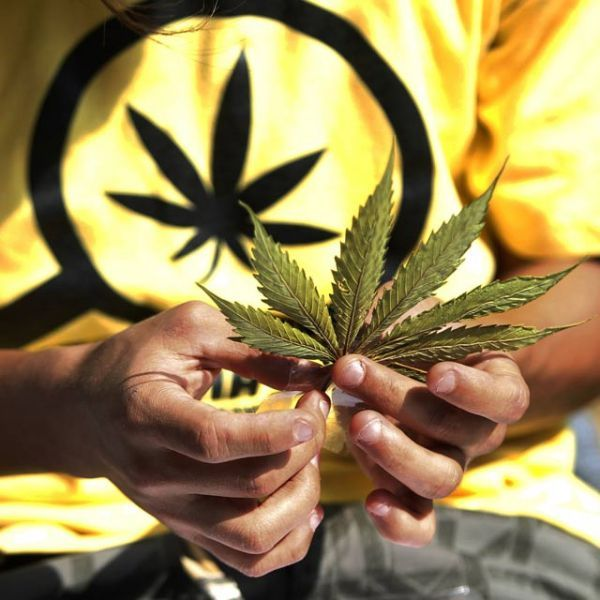 05.09.Cannabis.marijuana.drogue.Reuters.640.640