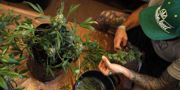 09.05.Cannabis.drogue.joint.Nicolas Garcia.AFP.1280.640