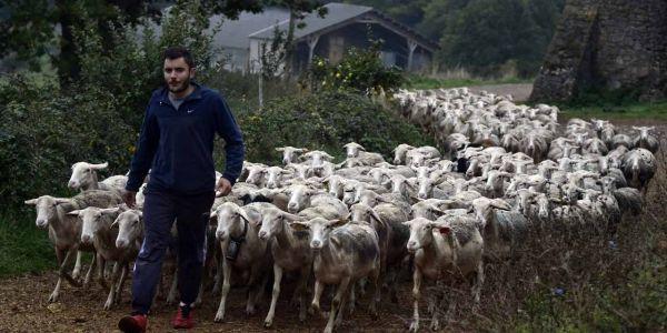 24.02.Agriculture agriculteur eleveur brebis.PASCAL PAVANI  AFP.1280.640