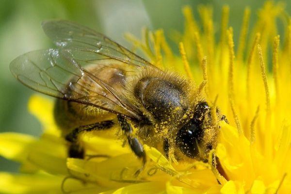 abeille 930x620