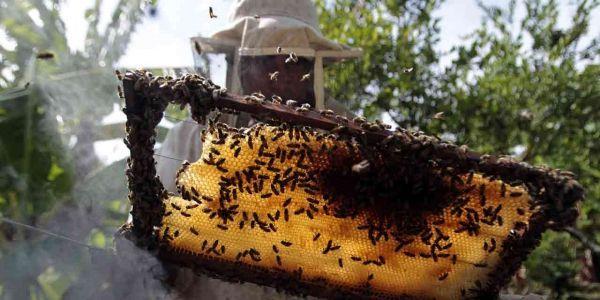 apiculteur miel abeille 1280x640