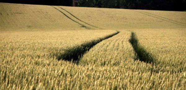blé-traces-bandeau