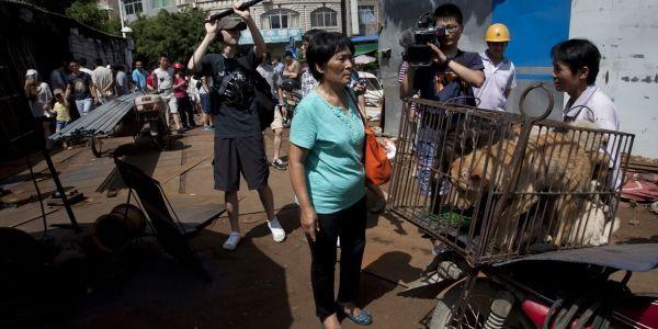 Chine chiens marmites