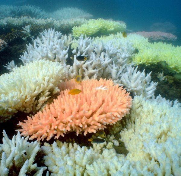 corauxinterieur