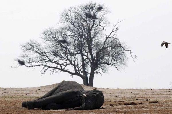 elephant zimbabwe 930