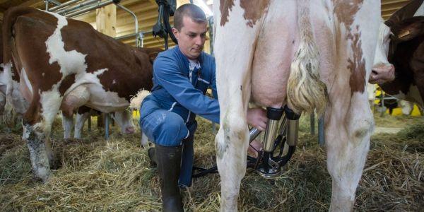 elevage lait 1280x640