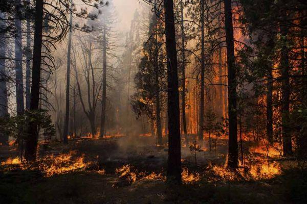 incendie au Yosemite