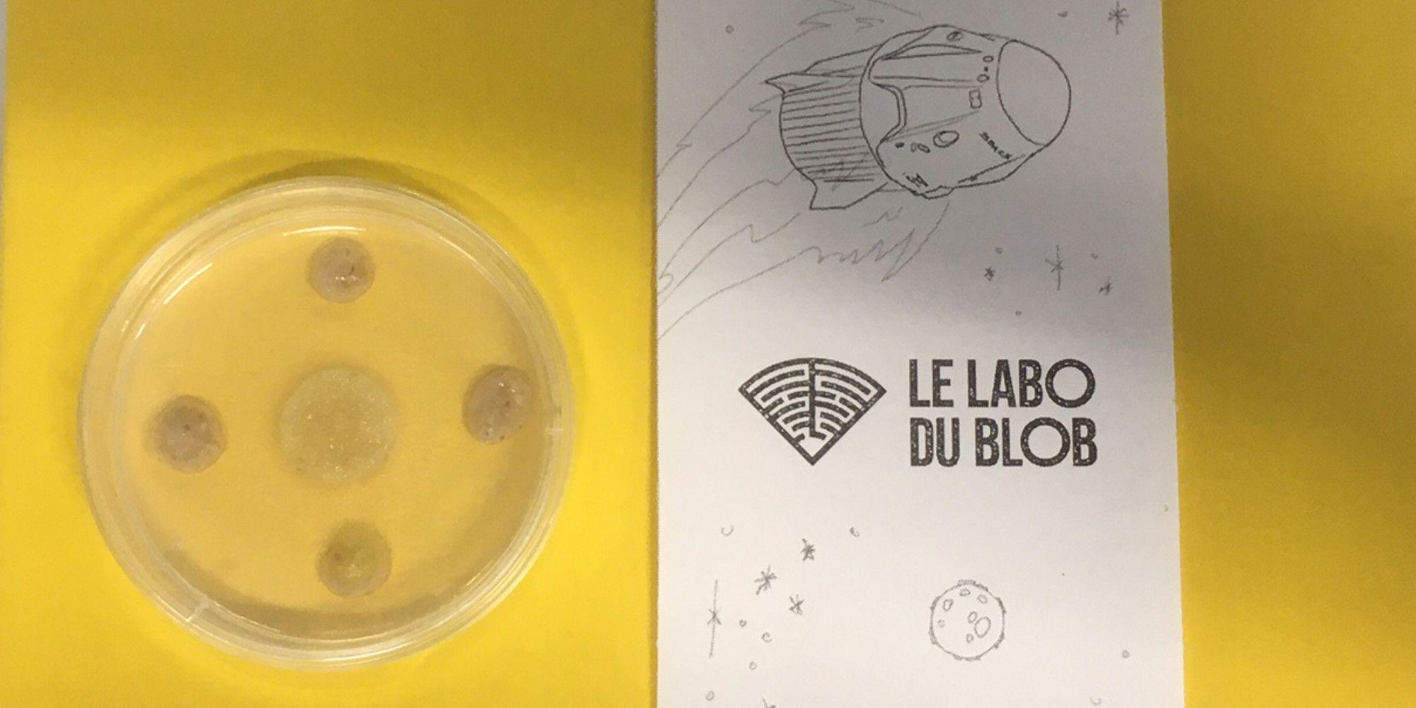 Il est possible de découvrir le blob, grâce à des kits fournis sur le site internet Labo du Blob.
