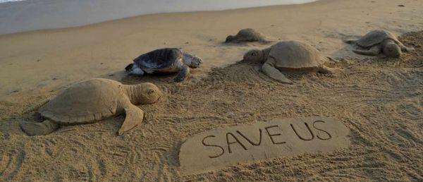 Les tortues de mer figurent sur la liste des espèces menacées (REUTERS)