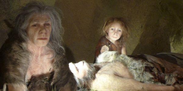 néanderthal 1280