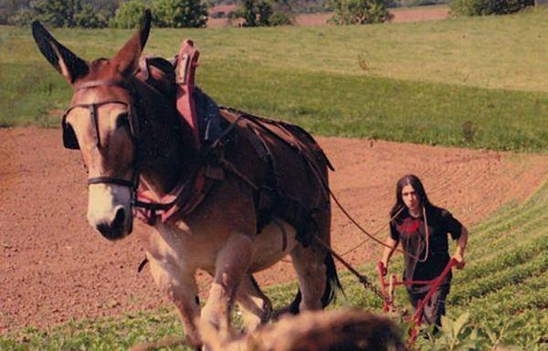 Owkari laboure un champs avec son cheval