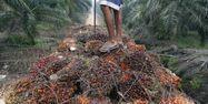 30.11.Huile palme indonesie.ADEK BERRY AFP.1280.640