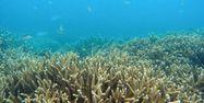 corail, grande barrière, Australie 1280x640