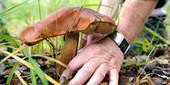 champignon champignons cèpe cèpes