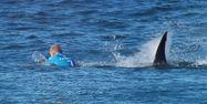 fanning requin 1280