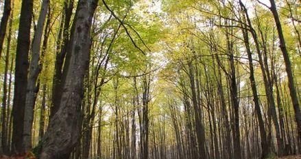 forêt 930x620