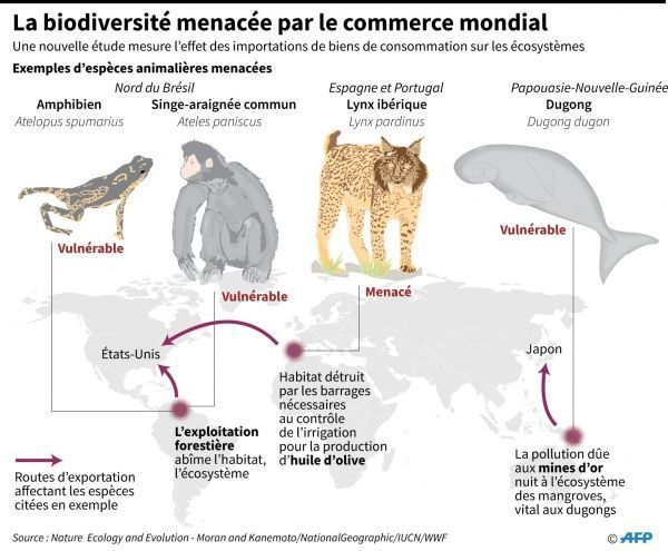 Infographie espèces menacées