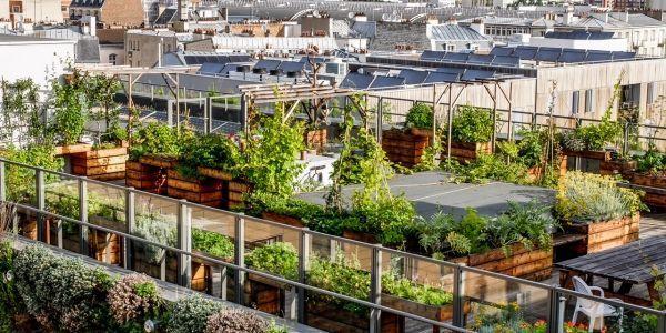 Un jardin thérapeutique a été installé sur le toit du centre Robert Doisneau, à Paris.