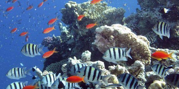 Corail de Polynésie