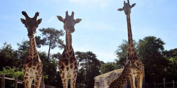 """Incendie au zoo de La Flèche : """"On a perdu une soixantaine de nos animaux"""""""