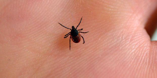 """Lyme : """"augmentation significative"""" des nouveaux cas en 2018"""