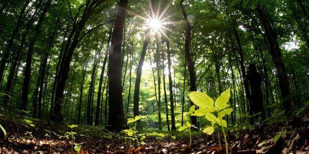 Le rôle essentiel des champignons dans le développement des forêts et du monde végétal