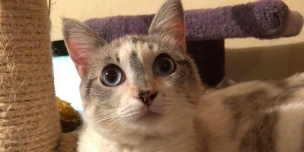 les photos de la chatte Tantine et maman sexe