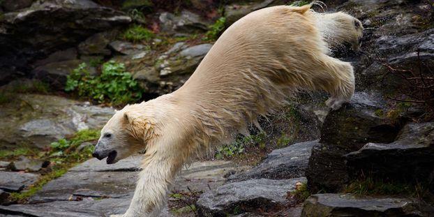 Cadavres d'animaux découpés et enterrés, vidange des eaux usées... Les pratiques douteuses du zoo...