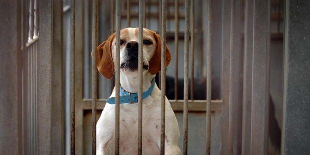 Confinement A Quelles Conditions Pourra T On Se Deplacer Pour Adopter Un Animal