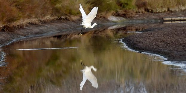 Croissant La Ligue de protection des oiseaux va porter plainte contre la ND-25