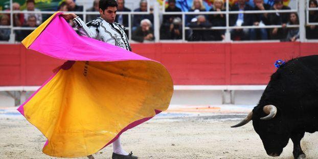 """Pernod Ricard abandonne son soutien à la corrida : """"C'est un tsunami"""""""