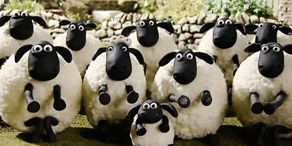 """Nadine Morano dénonce une """"invasion de moutons"""" après que des journalistes l'ont accusé (à tort) d'avoir parlé d'une """"invasion arabo-musulmane"""""""
