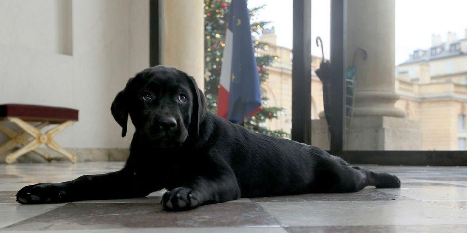 Où l'on apprend que même en s'occupant de son chien, Hollande tente de se démarquer de Sarkozy
